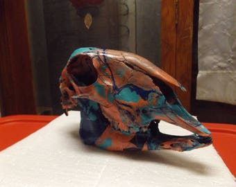 Tri colored Marbled sheep skull #26