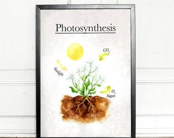 SALE - 25% OFF - Photosynthesis, giclee art print, watercolor, biology, science, geek, educational print, wall decor