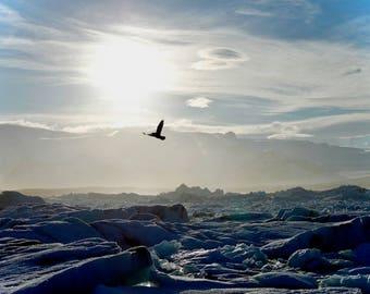 Photo Print: Iceland, Jokulsarlon, Iceberg Beach, Nature Photography