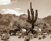 "Horse print,Wild Horse Photo from The Salt River in Arizona, Horse Photograph. Title: ""Siesta"""
