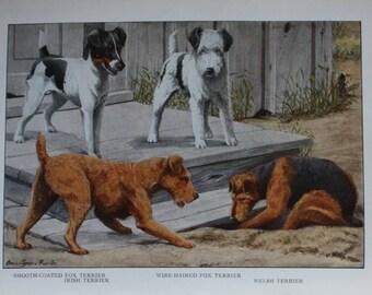 antique print terrier and doberman pinscher.  bulldog, smooth coated fox terrier irish terrier, wire haired fox terrier and welsh terrier