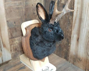taxidermy jackalope black