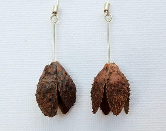 Beech Pod Earrings