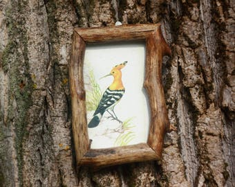 Bird art print Wood frame Bird picture Hoopoe picture Antique vintage illustration Wooden rustic decoration Nature art Raw wood