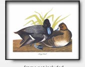 Scaup Duck Art, Printable Pair of Birds Home Decor (Instant Download Office Wall Art, Living Room Print jpg) James Audubon
