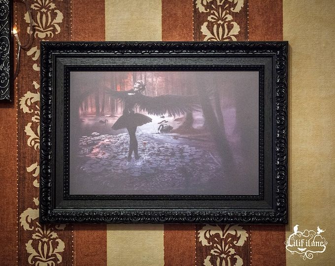 Black Swan picture in black Baroque wood frame A4