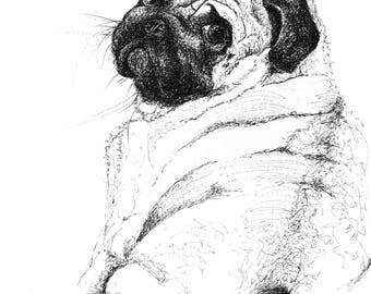 Coy Pug. Pug drawing. Pug artwork. Pug Gift. Pug decoration.
