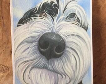 "tibetan terrier ""Spaghetti"""
