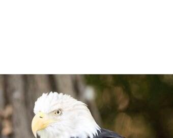 Photo greeting card - Eagle - Blank inside