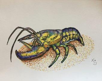Atlantic lobster, original A4 pen drawing. SEA LIFE