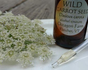 Wild Carrot Seed Tincture, Daucus carota, Queen Anne's Lace, QAL, bird's nest, alcohol extract, Vermont