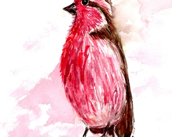 Purple Finch [31] Original, Prints, and Cards