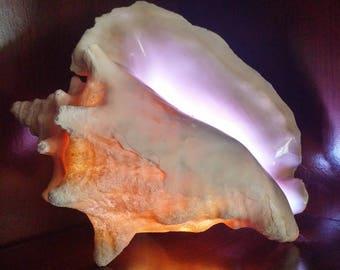 Bahama Conch Shell Light