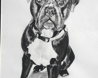 Dog Days. Print of Original Charcol. Dog illustration.