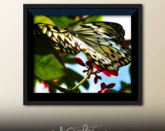 Printable Wall Art Butterfly Print #B03, Butterfly Decor, Butterfly Photo Closeup, Printable Butterfly Art, Printable Photo Art