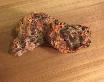 Rare Slab of Fossilized, Petrified Worms found in Montana. Creepy Fossil Rock Formations, Earthworms, Critter Garden, Collectible Bug Stones