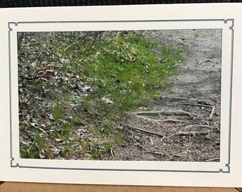 Cream colored photo note card with thin navy blue border