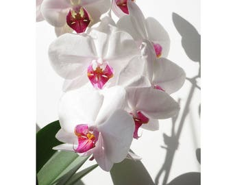 Orchid No.. 1 print photography download