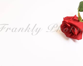 Red Rose Stock Photo / Valentine's Stock Image / Styled Stock Photography / Styled Desktop / Flatlay / Floral / Frankly Photos File # 47