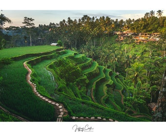 Bali Mountain Rice Terrace // Green Photography Print, Asia Landscape Decor, Ubud Nature Wall Art, Indonesia Photo, Tropical Office Decor