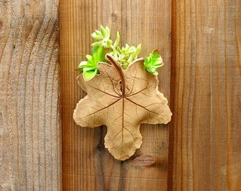 Clay Leaf Wall Planter - Succulent or Plant Holder Made with a Real Hollyhock Leaf - Ceramic Wall Hanging - Unique Gardener Gift - Imprint