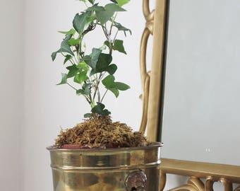 Lion's Head Brass Planter