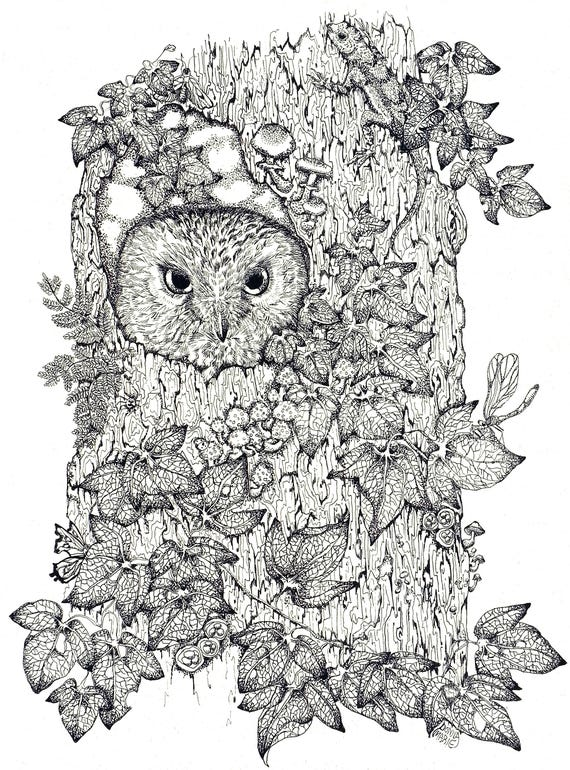 Blank Greeting Card- Nature and  Owl Birds -Thank You Note -Bird Art