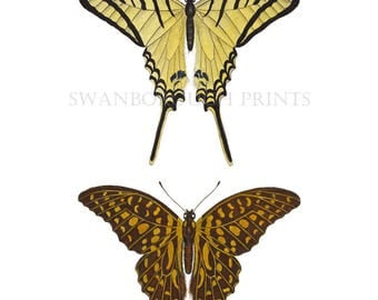 Swallow Butterfly Print with 2 Butterflies Cottage Garden Style Print of Butterflies. Guest Room Makeover Home and Living Butterfly Prints