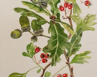 Autumn Watercolour Print - A4 - Acorns and Hawthorn