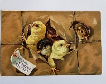 Easter Postcard / Antique Raphael Tuck & Son's Easter Postcard Embossed Chicks Posted 1908 Highly Collectible!