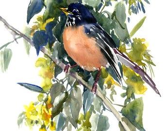 American Robin  and Linden Tree,  original watercolor painting, robin art, robin bird
