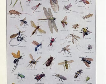 Vintage Dictionary Print of Insects. 1968.