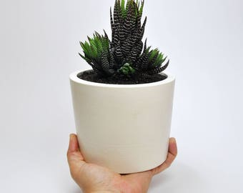 Concrete planter | Succulent Pot | Modern planter | succulent planter | Concrete flower pot  | geometric planter | Cactus planter
