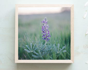 Wildflower Print - Large Wall Art, Oversize Wall Art, Flower Wall Art, Boho Prints, Flower Still Life, Flower Photography, Wildflower Print