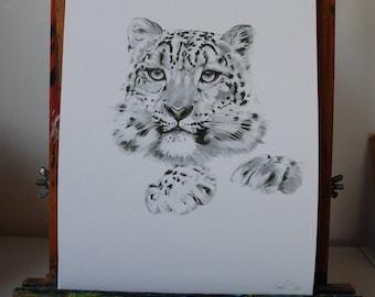 Snow Leopard, Fine Art Print of Original Pencil Drawing, A4, Limited Edition Print