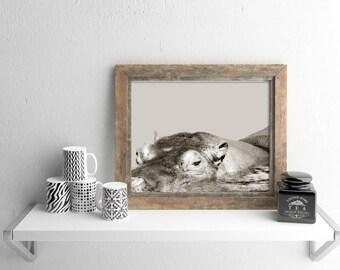 Nursery animal print | hippopotamus art print | digital download | animal art print | wildlife photography | hippo art print | printable