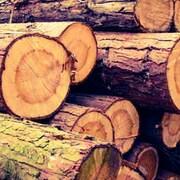TreeCycleNW