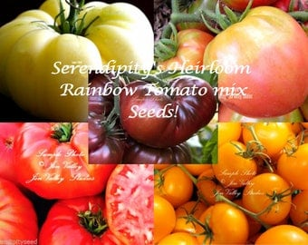 Serendipity's Heirloom Rainbow Tomato mix collection 50 seeds Packed separate All Natural Tomato Seeds 5 varieties 10 seeds of each