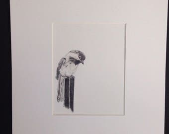 Original Black Capped Chickadee drawing