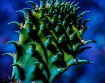 Bold Cactus Color