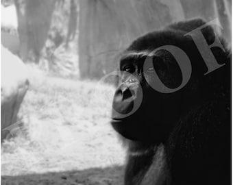 Gorilla   Black & White