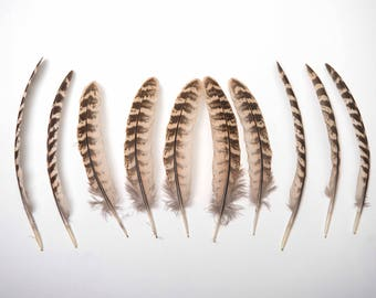 Natural Female Pheasant Wing Feathers - Brown Striped - 15-19cm Long UK Seller - Great for crafts, jewellery + dream catcher making!