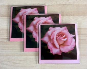 Greeting Card Pink Roses nature photography pink rose 5 x5 inch in size, blank inside Pack of 3