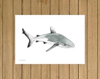 Blacktip Shark, Watercolor Illustration, Giclée Print, A4 or A5 size