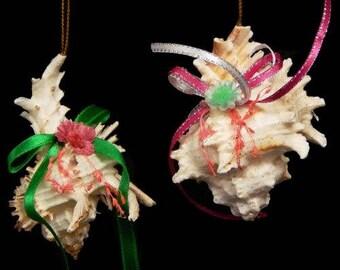 Murex Seashell Christmas Ornament  (C1-40)  (EA)