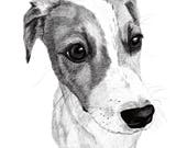 "Pet portrait DIGITAL, custom pet portrait, Illustration, drawing, your pet 8""x10"" or 11""x14"" JPG & PDF file - No Print - Example here"