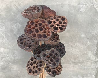 "Lotus Pods, Dried Flowers, Dried Lotus Pods, Wedding Flowers, Home Decor - 18"" to 20"" Tall"