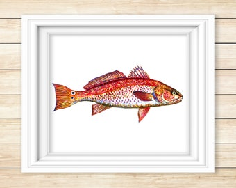 Red Drum (Redfish) Watecolor Print
