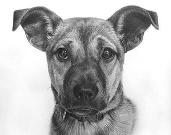 Anniversary Sale Pet Portrait , Dog Portrait ,Animal Portrait, Custom Pencil Sketch From Your Photo, Hand Drawn