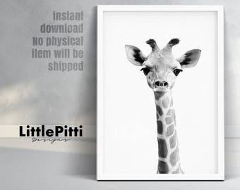 Baby giraffe print, safari african animal, cute giraffe photo, safari baby shower, black & white print, boys room art, giraffe animal print